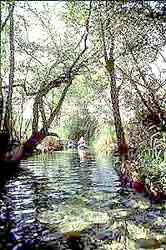 canoe in the jungles of the Mayan Riviera