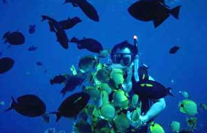 Enjoy the tropical fish around XpuHa, Mexico